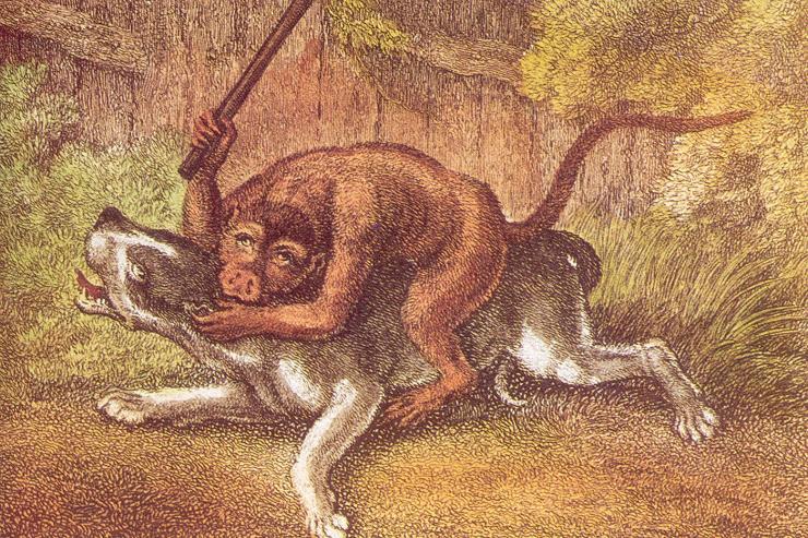 BulldogandMonkey