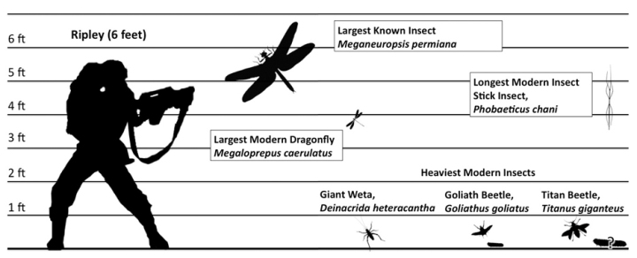 insect-size-chart1 SMALL