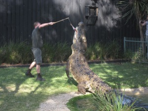 Leaping Saltwater Crocodile