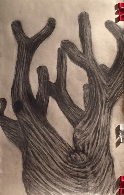 Sketch5Meyer