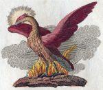 800px-Phoenix-Fabelwesen