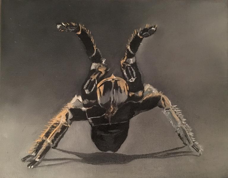 tarantulameyer