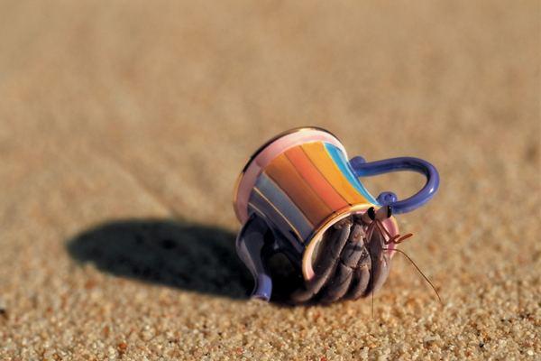 funny_hermit_crab_3