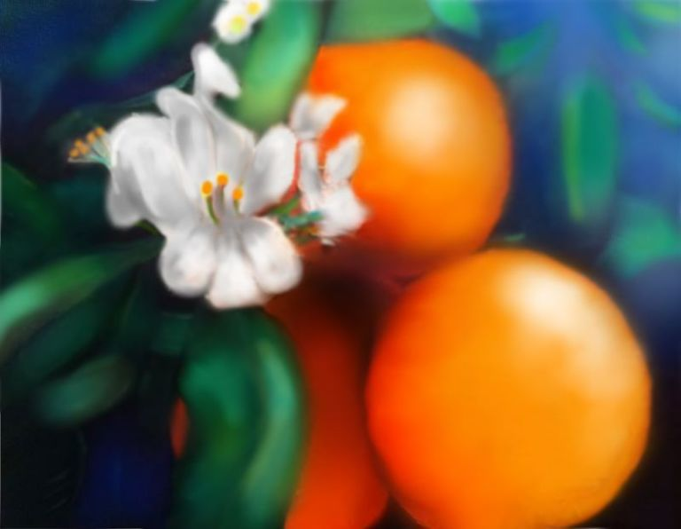 orangeblossom-meyer copy 2